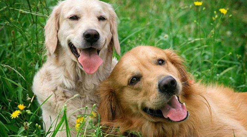¿Por que los perros rozan el culete contra el suelo?