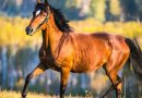 Los síntomas de buena salud en un caballo